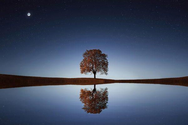 tree, lake, reflection
